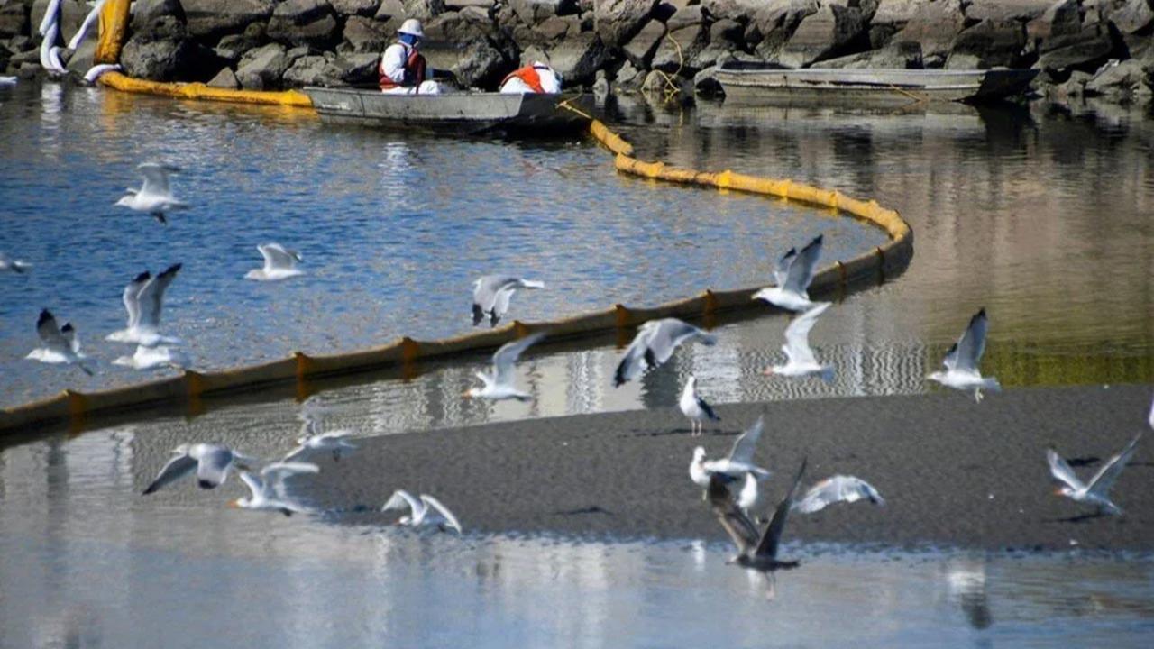 ABD'de çevre felaketi: Sahil petrolle kaplandı