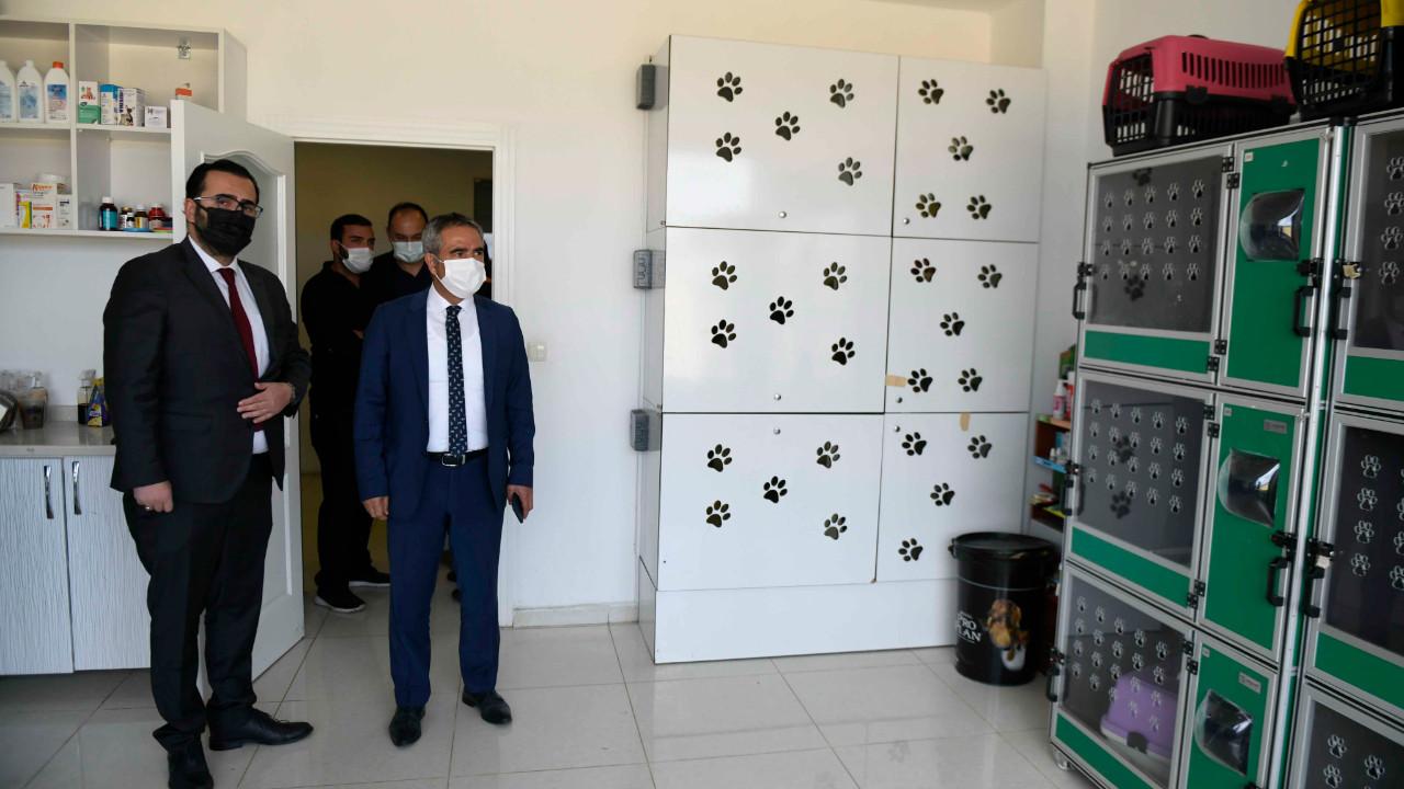 Ankara Büyükşehir sokak hayvanları için özel hastanelerle el ele