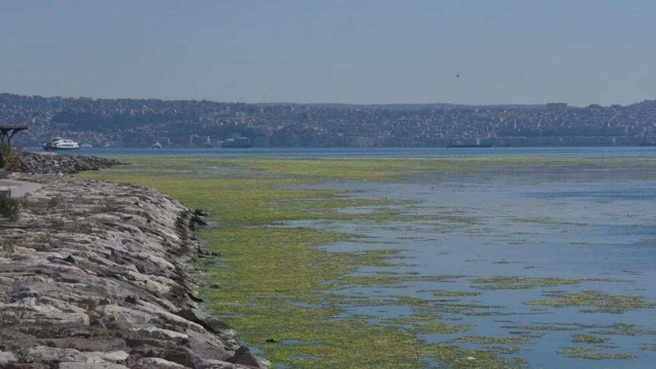 İzmir'de denizin rengi değişti