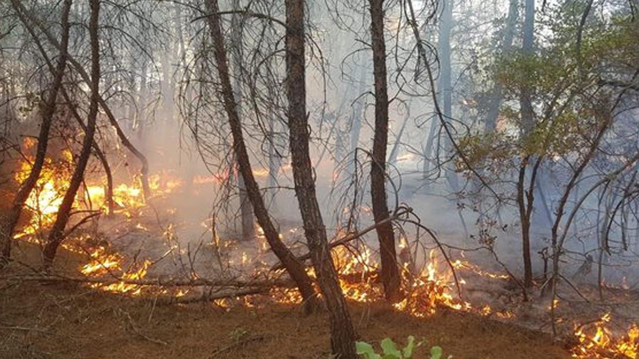 Kütahya'da 4 farklı noktada orman yangını: Alevler büyüyor