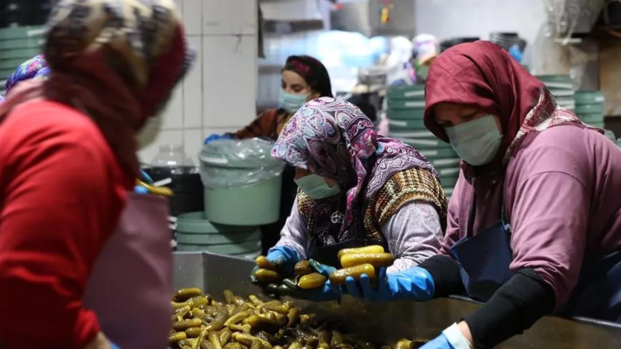 Turşu cenneti: 50 bin ton turşu yapılıyor, 100 ülkeye gönderiliyor: Köyün nüfusu 5 bine çıktı