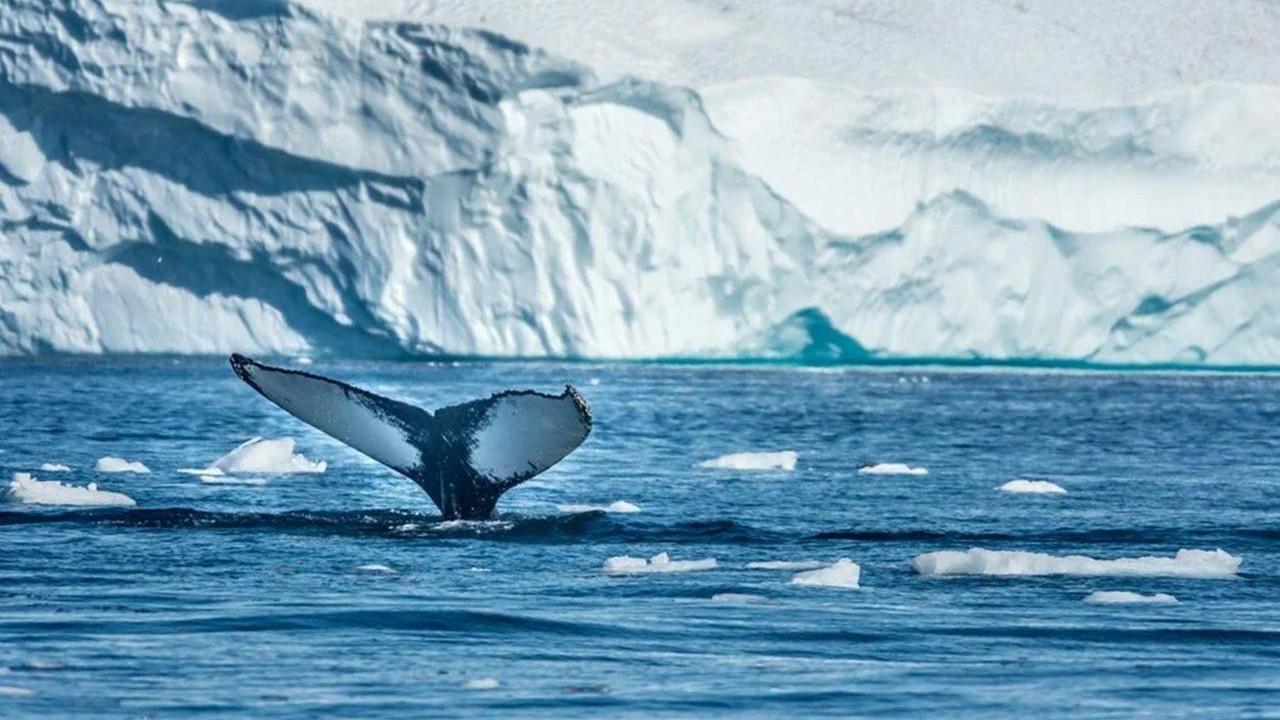 Arktik Deniz Buzu hızla eriyor! Bilim insanları yok olacağı tarihi açıkladı