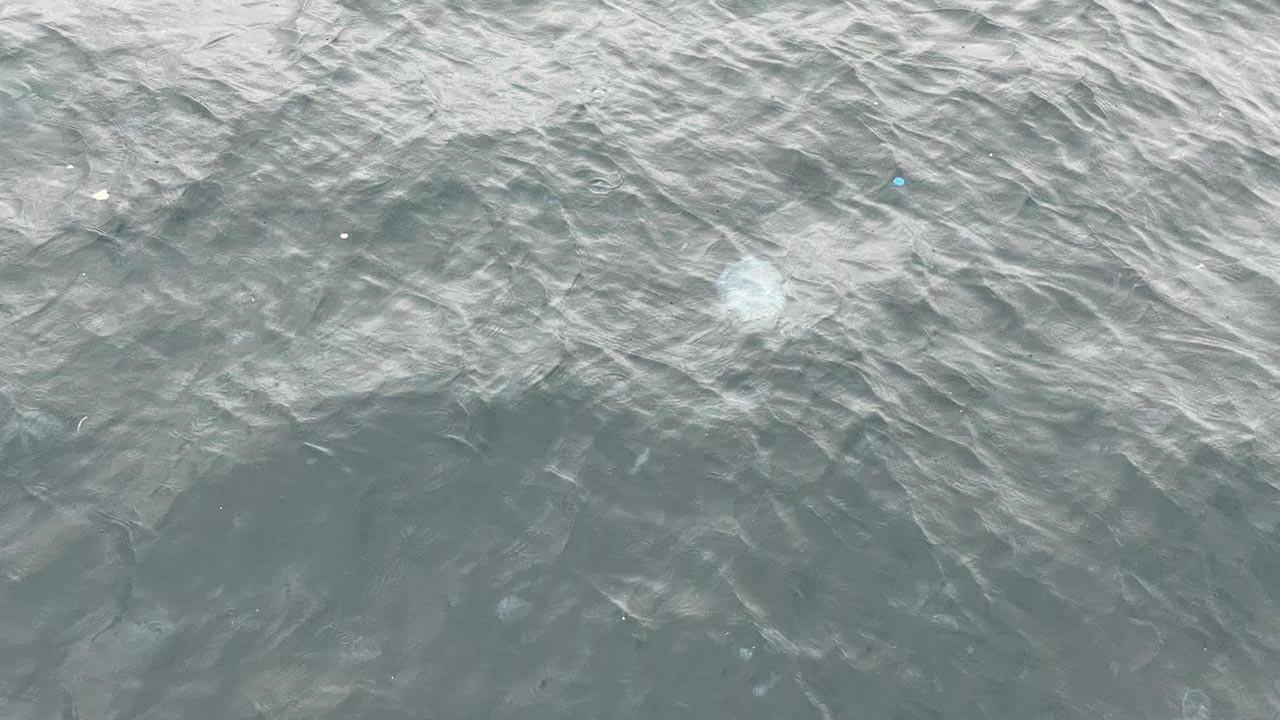 İstanbul'da sahili denizanaları bastı