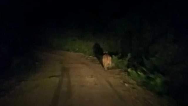 Ayı, köy yolunda önüne çıkan aracı taşladı