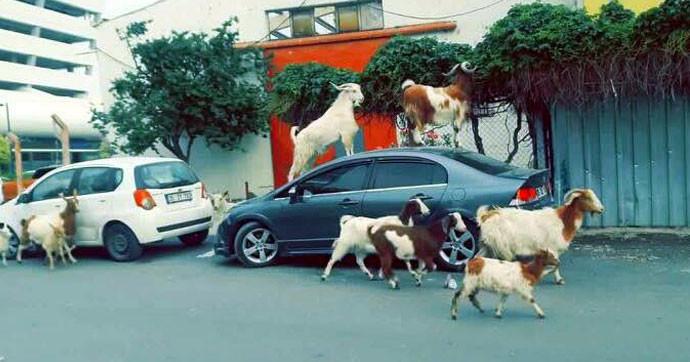 Yer İzmir... Bu görüntüler sosyal medyayı salladı
