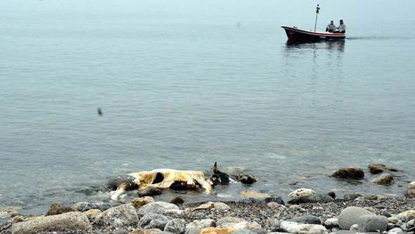 Görenler şaştı kaldı ! Kıyıya vurdu...