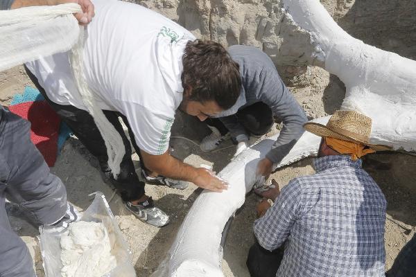 Uzmanlar şaşkın ! Kayseri'de 7,5 milyon yıllık keşif