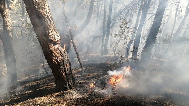 Adana'da orman yangını çıktı