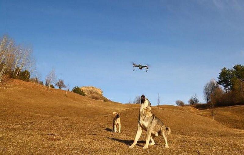 Dronu havada yakalayıp parçaladı