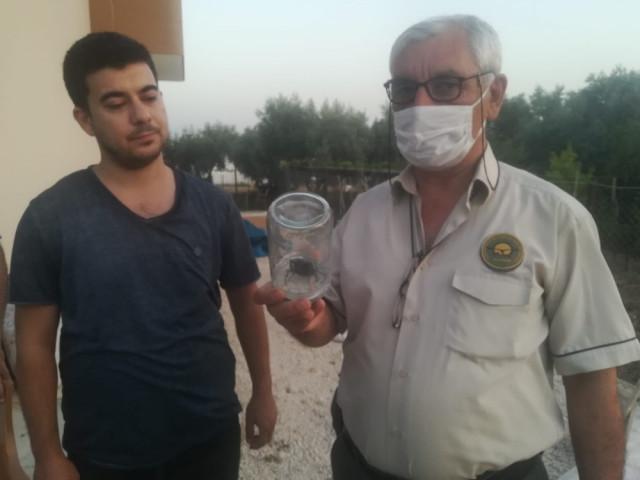 Nesli tehlikede olan geyik böceği Osmaniye'de ortaya çıktı
