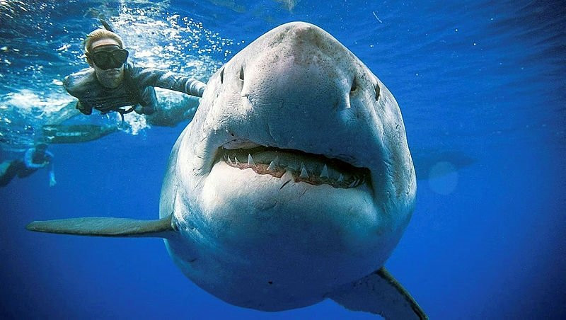 Böyle çılgınlık görülmedi! Ölüm makinesi ile birlikte yüzdüler!