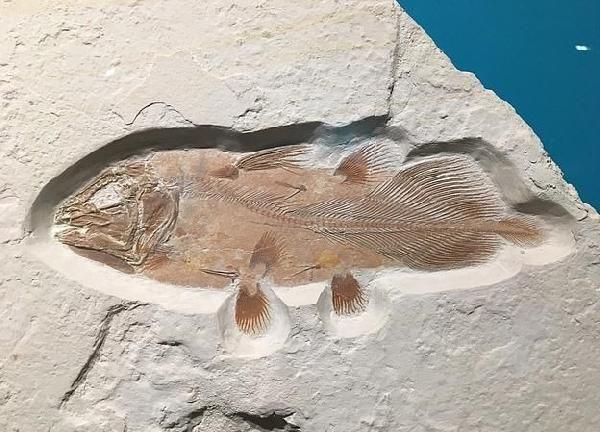 66 milyon yıllık balık fosili bulundu